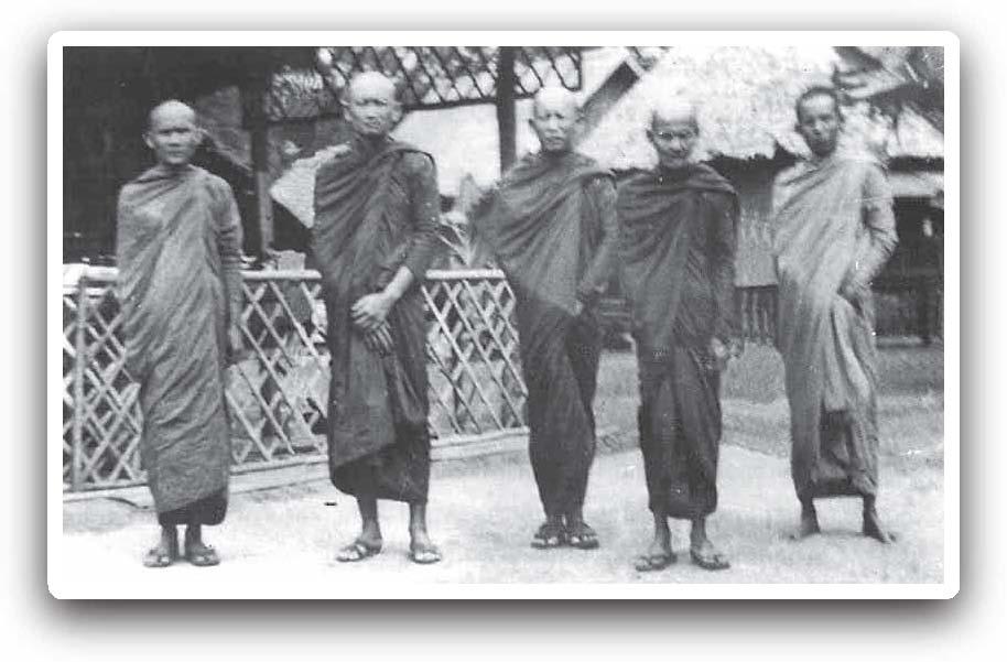 stammen chinesen vom affen ab